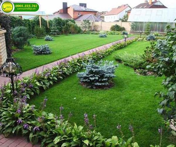 cách cỏ trồng trong sân vườn