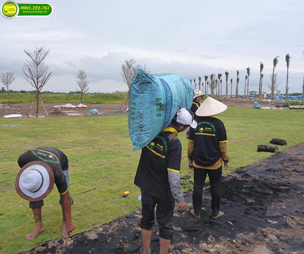 công ty trồng cây xanh