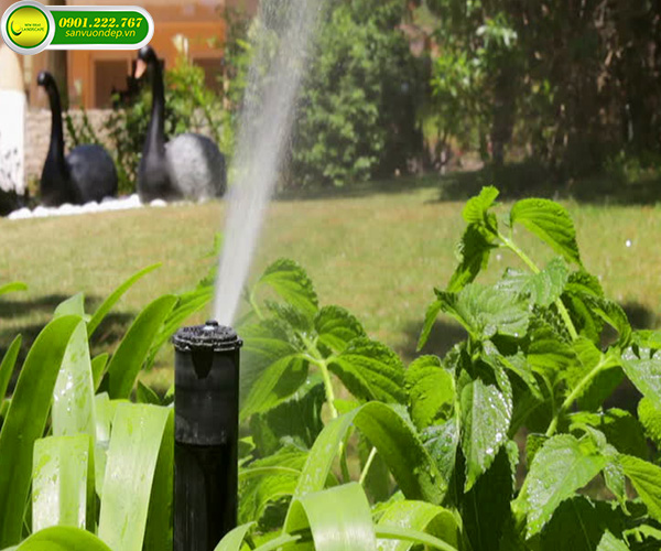 Hệ thống tưới tự động cho sân vườn