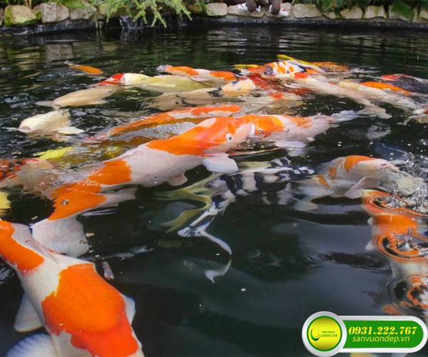 Ý nghĩa màu sắc cá Koi