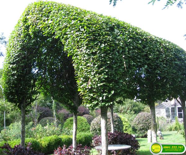 chòi cây xanh