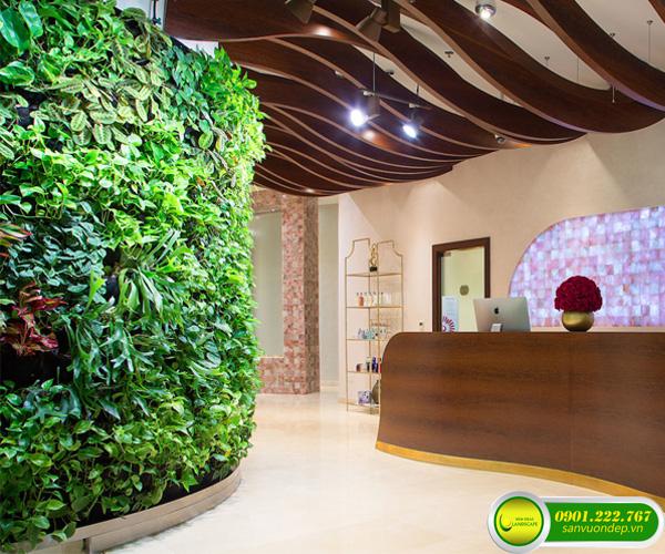 tường cây xanh spa